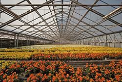 Extra tijd definitieve coronasteun land- en tuinbouw tot 31 oktober